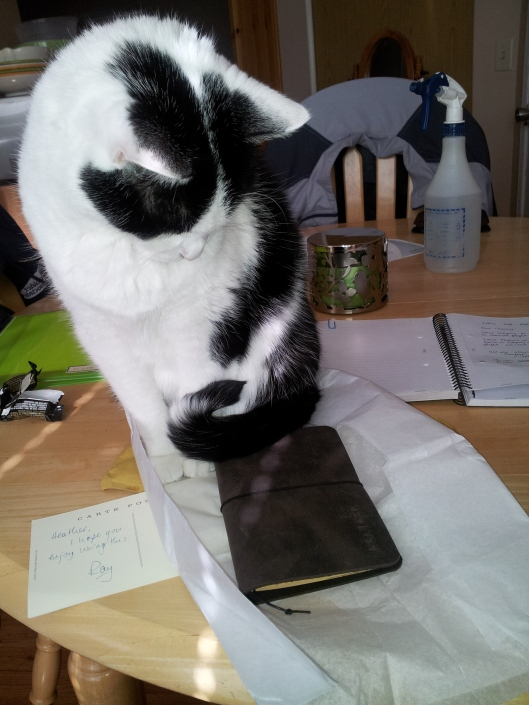 3 gracie looking at notebook