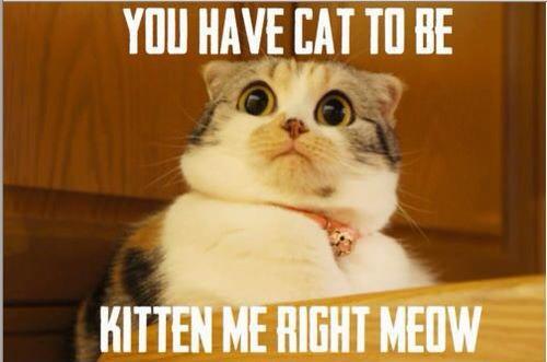 kitten me right meow