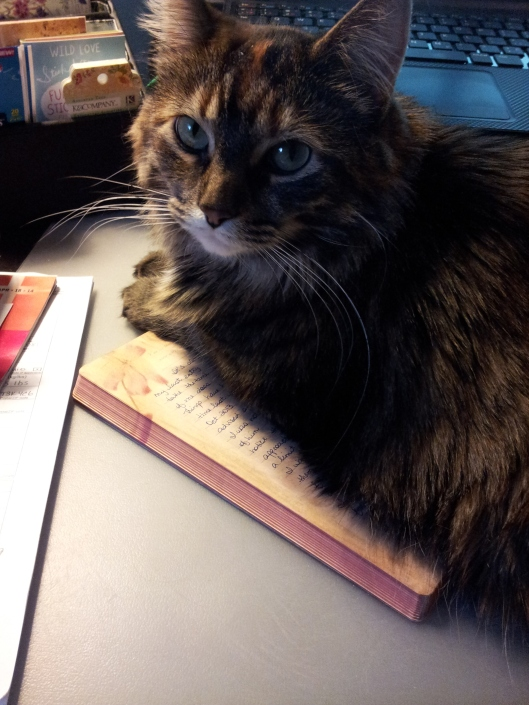 halley on my journal
