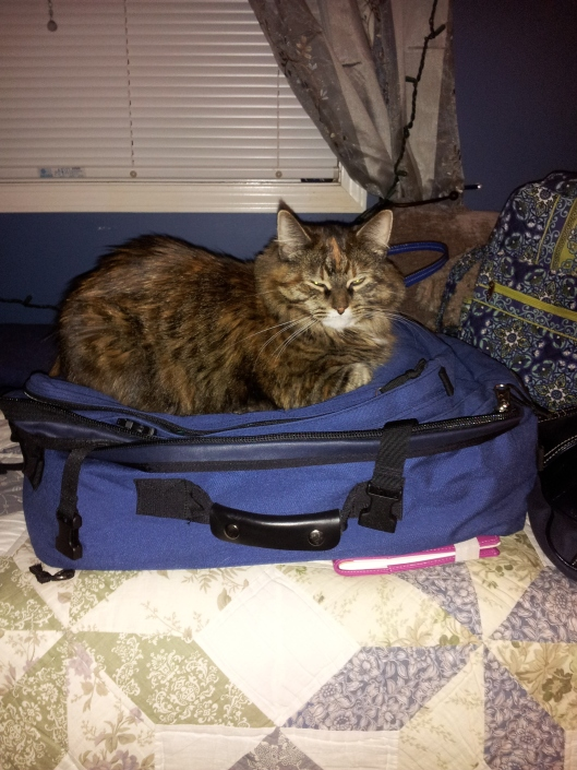 halley on my suitcase
