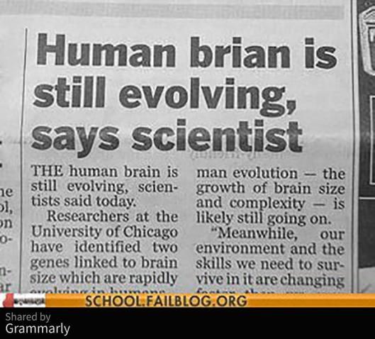 human brian